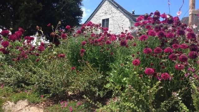 Garden_11_-_1