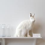 we love father rabbit
